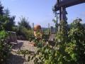 2. Bild / Hügellandhof