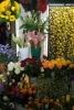 1. Bild / Blumen Just
