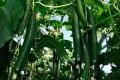 2. Bild / Gartenbau Kölbl