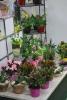 2. Bild / Blumen Just