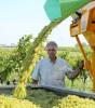 3. Bild / Der Stadlmann  Weinbau & Heuriger