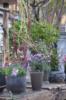 2. Bild / Floral Garage Griessmaier