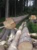 3. Bild / Holzschlägerung Kiechl