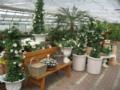 3. Bild / Gartengestaltung & Floristik Blumen Tauber GmbH