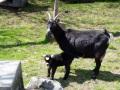 2. Bild / Lechnerbauer  Urlaub am Bauernhof