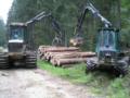 2. Bild / Holz Berner GmbH