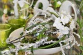 2. Bild / Grüne Laune - Floristik und mehr