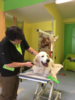 2. Bild / Dogs haircut by sibylle