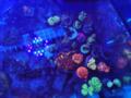 3. Bild / Aquarium-Service Dominik Gintenreiter