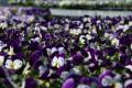 3. Bild / Blumen Sonnleitner