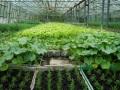 1. Bild / Niedermaier Gemüsehofladen