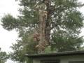 1. Bild / Baumpflege & Gartengestaltung  Kreitl e.U.