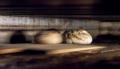 2. Bild / Bäckerei-Konditorei  Cafe Reicht