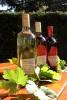 2. Bild / Der Stadlmann  Weinbau & Heuriger