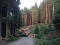 1. Bild / Holzschlägerung Kiechl