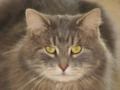 2. Bild / Tierarztpraxis Strele