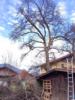 2. Bild / Baumwohl Tirol  Inh. Andreas Magreiter
