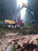 1. Bild / Holzschlägerung, Bringung u. Erdbau Peter Katzensteiner