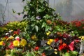 2. Bild / Blumen Sonnleitner