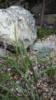 3. Bild / Der Garten Dave
