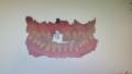 2. Bild / Alp-Dental e.U.
