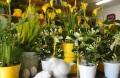 1. Bild / Blumenwelt  Anita Hollaus