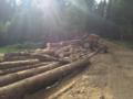 2. Bild / Forstunternehmen und Holzhandel  Sturm Thomas Franz