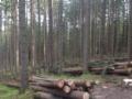2. Bild / Holzschlägerung Kiechl