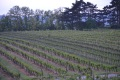 3. Bild / Weinbau Pamperl  Josef u. Maria Pamperl
