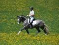 2. Bild / Pferdezucht Kromoser