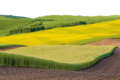 3. Bild / GreenPork GmbH