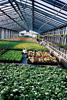 3. Bild / Gartenbau Heissl-Winkler Floristik KG